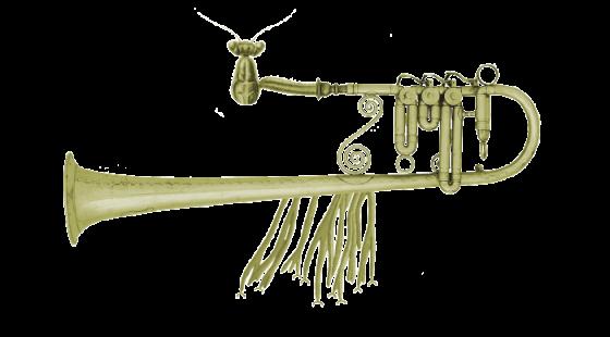 Cvrčule Pronikavá